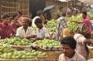 Largest Mango Market in Bangladesh_19